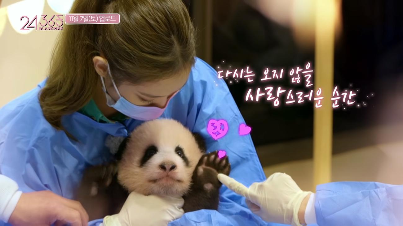 blackpink dikritik pegang anak panda
